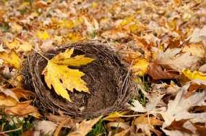 Autumn Empty Nest