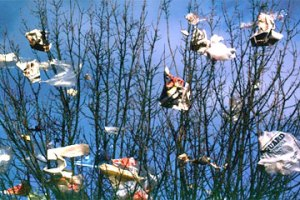 plastic bags in trees