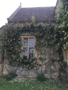 roses at Asthall Manor