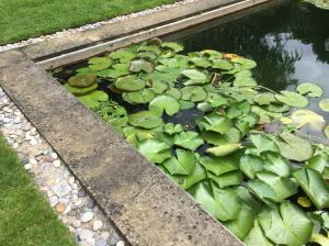 swimming pond at Asthall Manor